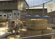Director Mode Actors GTAVpc Animals Boar