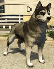 Husky-GTAV-PS4