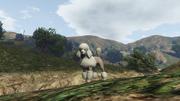 Peyote Plants Animals GTAVe Poodle