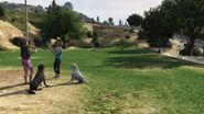 Vinewood Hills Dog Exercise Park GTAV looking east