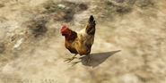Chicken-GTAV-BlaineCounty