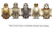 Trainee owlets