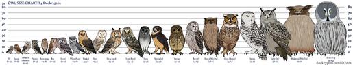 Owlsize chart w labels-dorkryptos-0