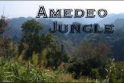 Amedeo Jungle logo