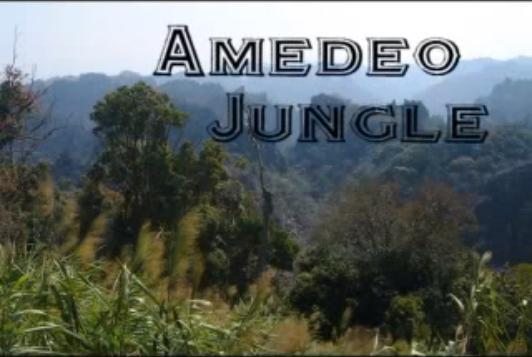 File:Amedeo Jungle logo.png