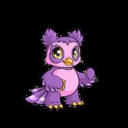 Purple Vandagyre