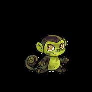 Camouflage Mynci