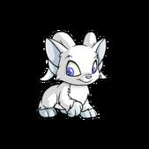 Acara white