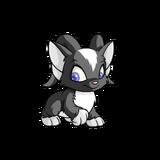 Acara skunk