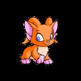 Acara orange