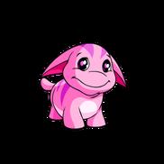 Pink poogle