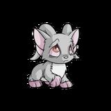 Acara grey