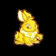 Cybunny gold