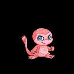 Maraquan mynci