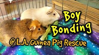 Boy Bonding @ Los Angeles Guinea Pig Rescue