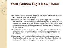 Guinea-pig-care-sheet-slideshow-4-728