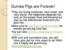Guinea-pig-care-sheet-slideshow-15-728