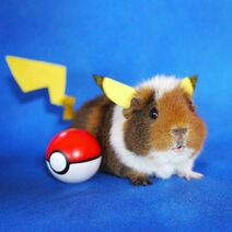 Fuzzberta-pikachu.jpg.653x0 q80 crop-smart