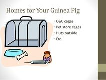 Powerpoint-presentation-about-guinea-pig-tips-and-facts-3-638