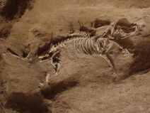 Fossilpig-400x300