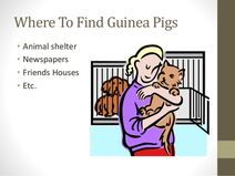 Powerpoint-presentation-about-guinea-pig-tips-and-facts-6-638