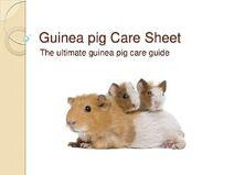Guinea-pig-care-sheet-slideshow-1-728
