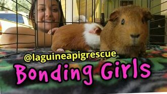 LA Guinea Pig Rescue Girls Bonding