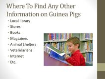 Powerpoint-presentation-about-guinea-pig-tips-and-facts-7-638