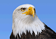 File:Eagle.small.png