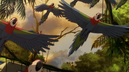 G-Reco Movie II Animal 21