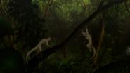 G-Reco Movie II Animal 26