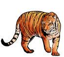 Тигр (Tiger)