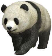 Panda (Warriors Orochi 4 - The Curse of the Demon Snake)