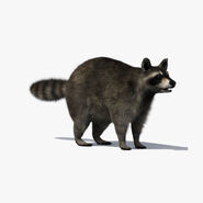 Warriors Orochi 4 - Raccoon
