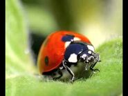 Ladybug - Warriors Orochi 4 - The Curse of the Demon Snake