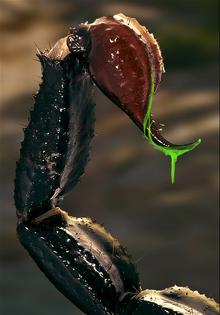 Manticore Venom Placeholder