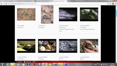 British Reptiles & Amphibians Trust