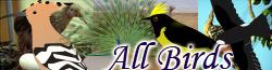 File:Allbirds.png