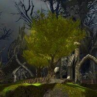 The Eternal Grove