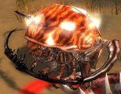Rock Beetle