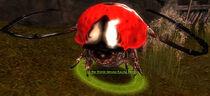 Lisa the World-Famous Racing Beetle