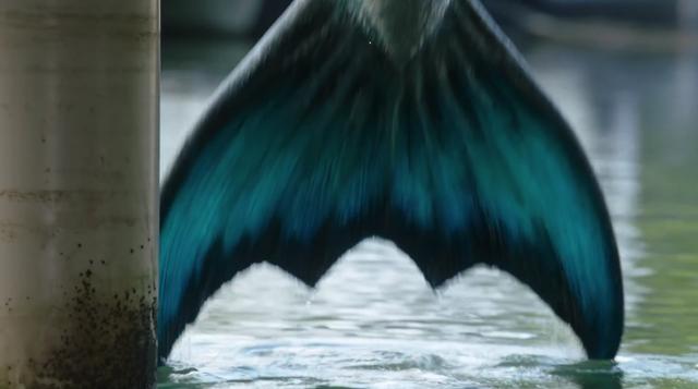 File:Zac's Tail.png