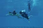 Phoebe Filmed Underwater