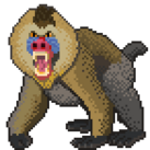 An angry mandrill