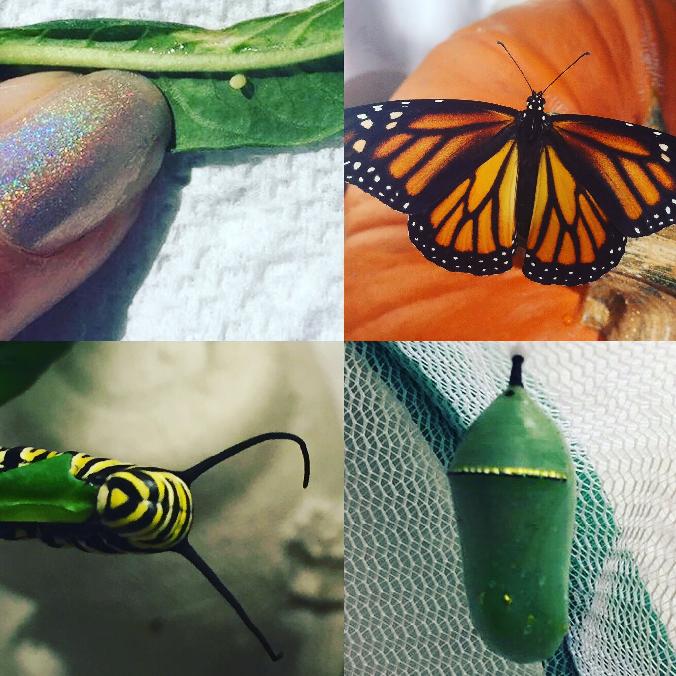 Promo butterflies