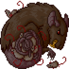 Quest rat