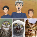 Owls.jpg.jpg
