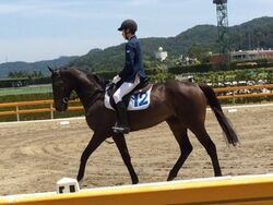 Tohoku (horse)