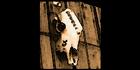 Glados screens sign skull