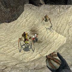 Pheropods training in the Vortigaunt Camp.